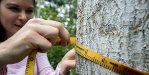 So which tree species actually store the most carbon?
